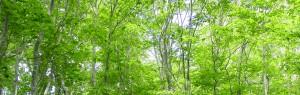 林 ワイド